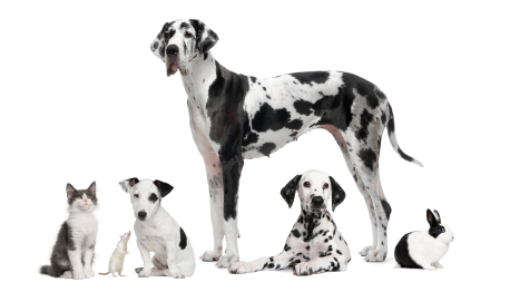 Tips To Avoid Pet Damage To Your Floors Tips To Avoid Pet Damage To Your Floors